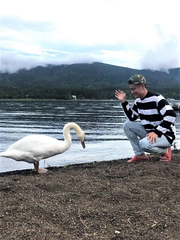 山中湖のアヒル