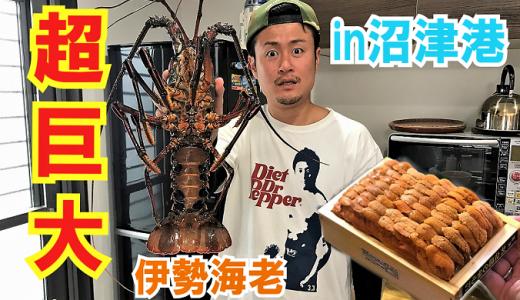 沼津港魚市場で新鮮な海鮮を原価で購入していくらパーティを開催!
