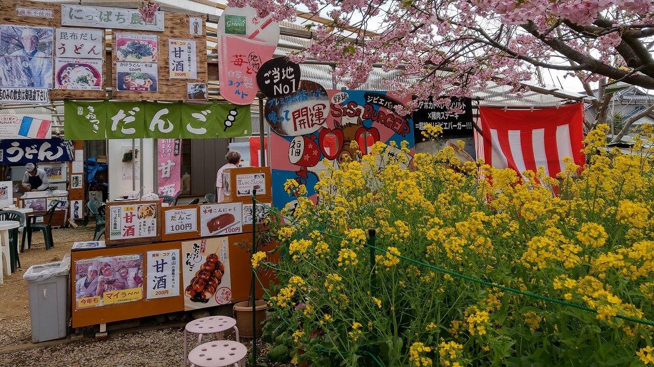 河津桜まつり 菜の花ロードから見える看板