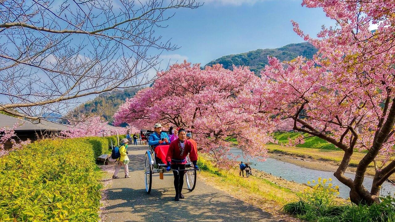 みなみの桜と菜の花まつり お花見人力車