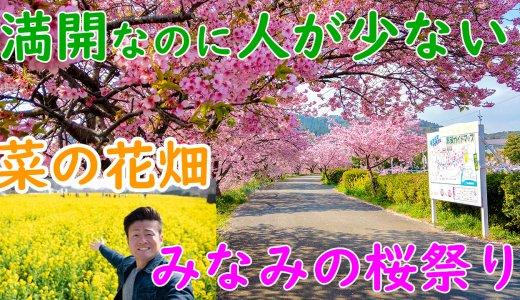 みなみの桜と菜の花まつりは混雑に悩まず早咲きの桜を楽しめる穴場イベント