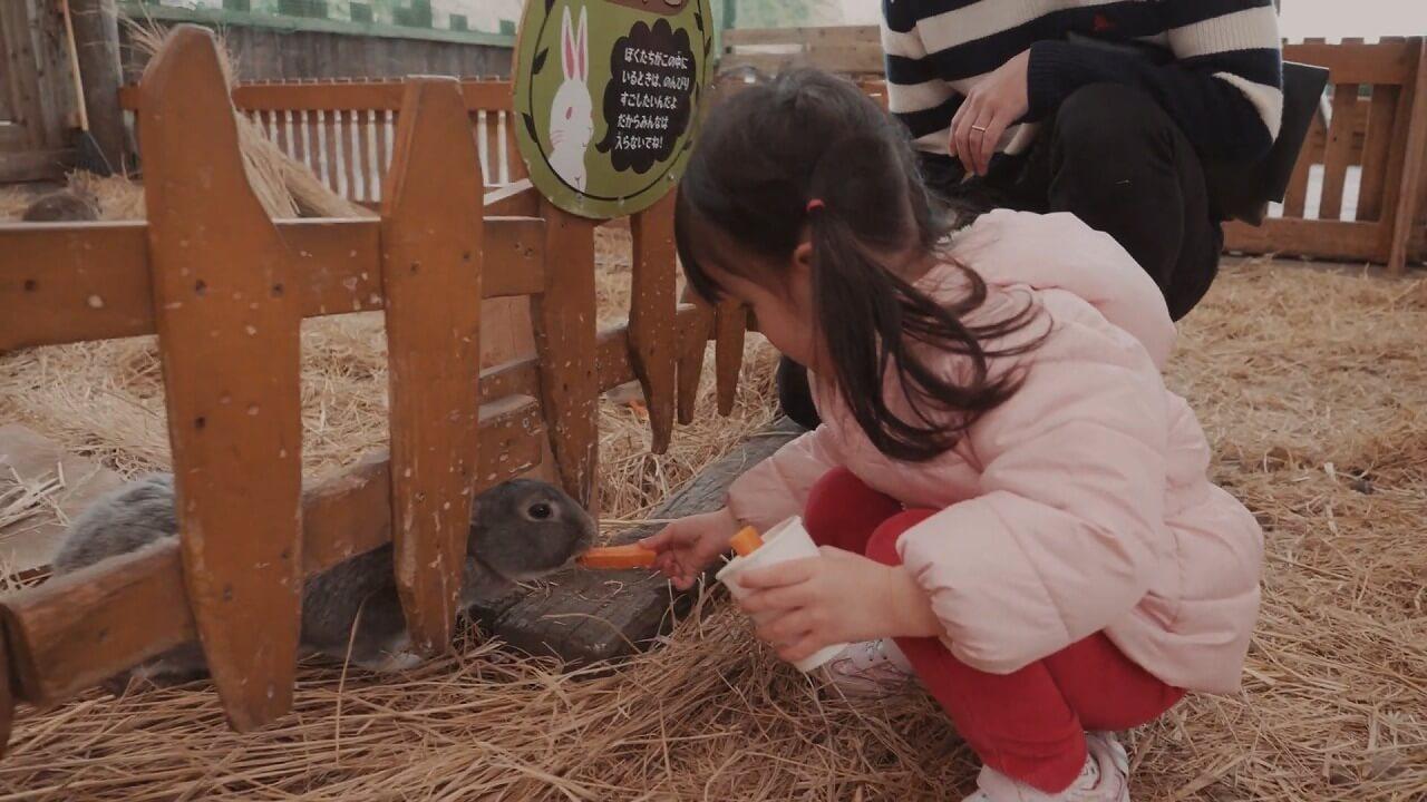 まかいの牧場 ウサギにエサをあげる女の子