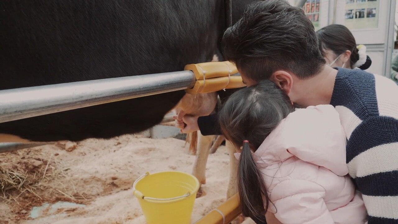まかいの牧場 牛の乳しぼり