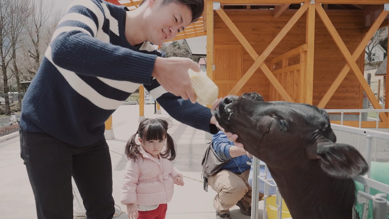 まかいの牧場 仔牛にミルクをあげる男性と見つめる女の子