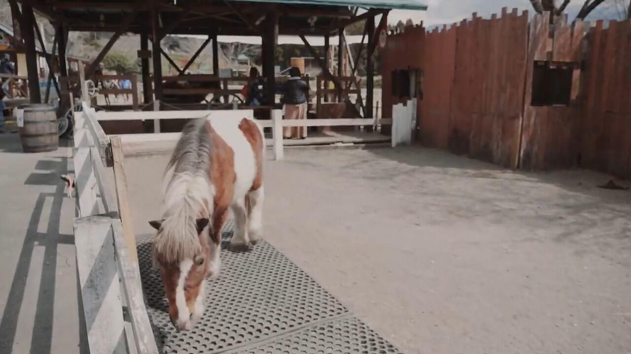 まかいの牧場 ポニー