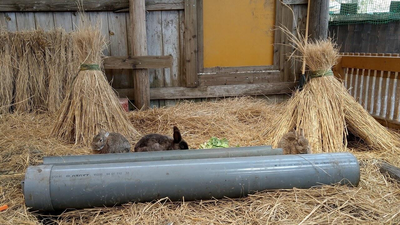 まかいの牧場 ウサギ